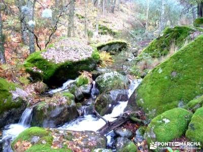 Reserva Natural del Valle de Iruelas;charca verde la pedriza los galayos gredos rutas en madrid